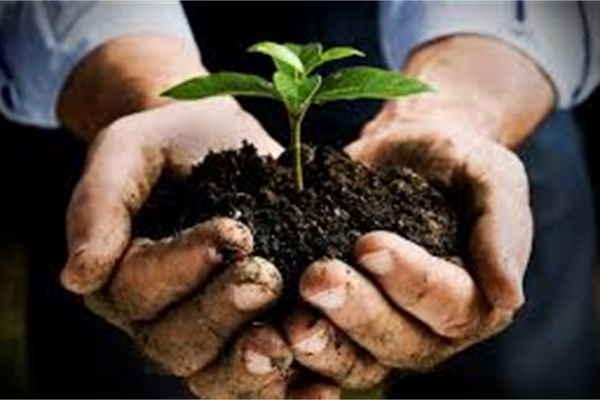 Gardener - Job representing image