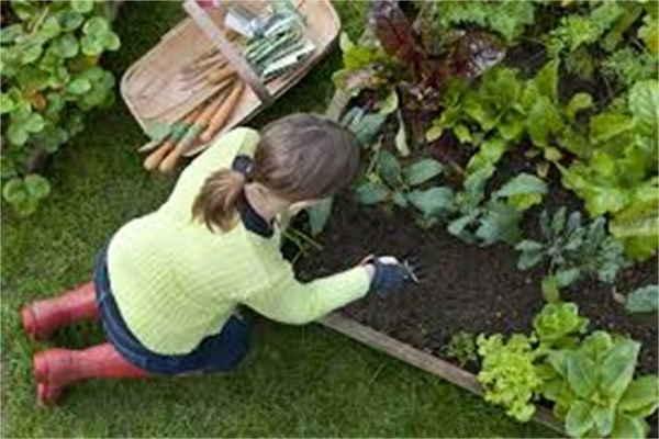 Seasonal Gardener - Job representing image